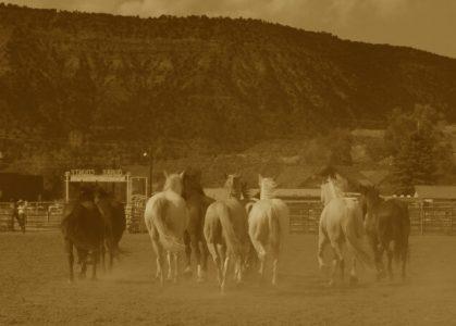 Ridgway rodeo